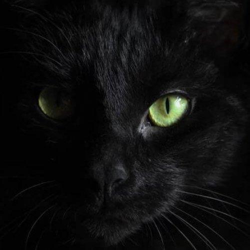 แมวดำ หีบศพ โลงศพ สุริยาหีบศพ โลงศพราคา